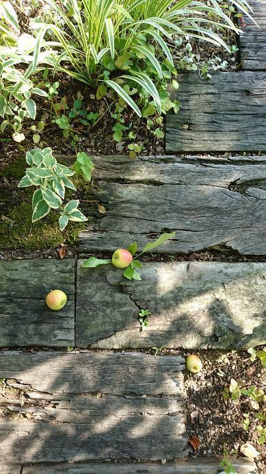 ヒメリンゴ.jpg
