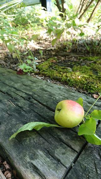 ヒメリンゴ1.jpg