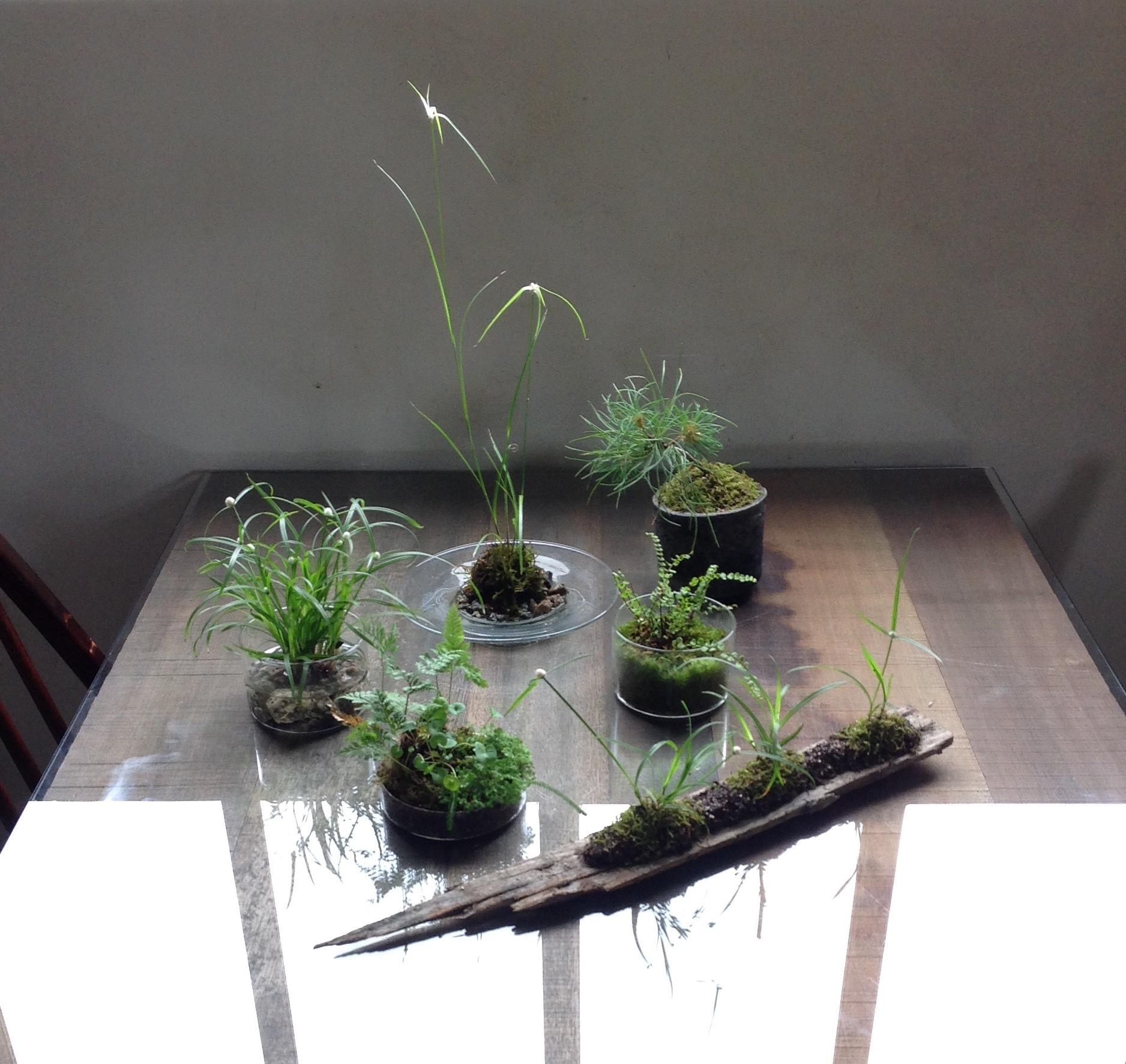 夏草の寄せ植え.jpg